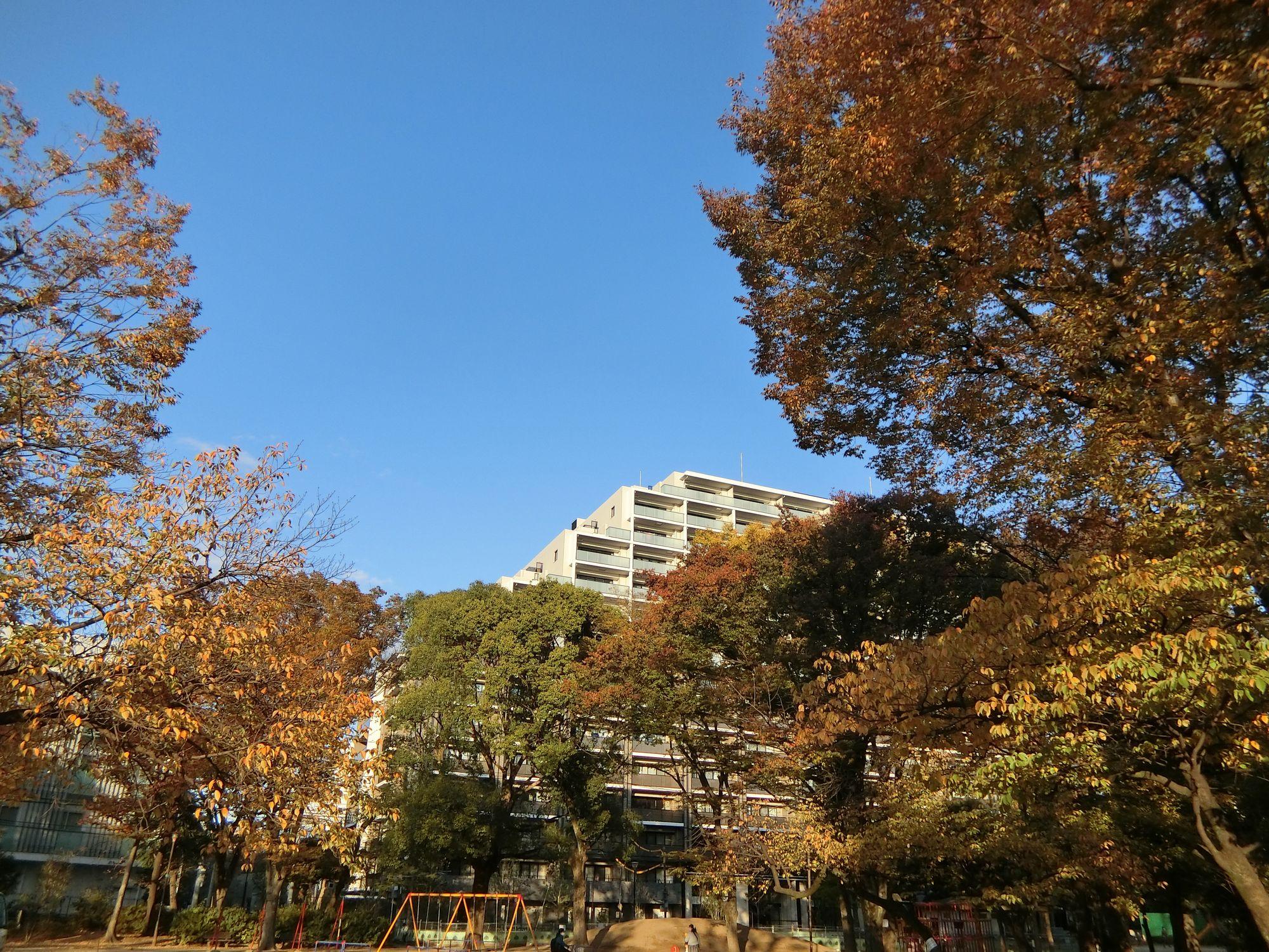 板谷公園から見た「アトラス加賀」(2020年11月撮影)