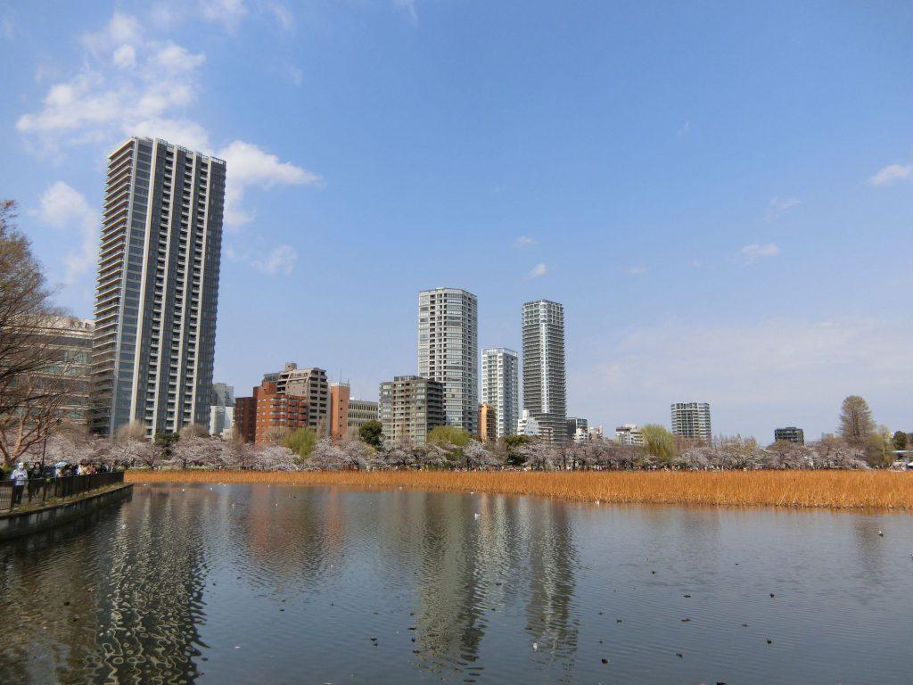 都立上野恩賜公園の不忍池の桜
