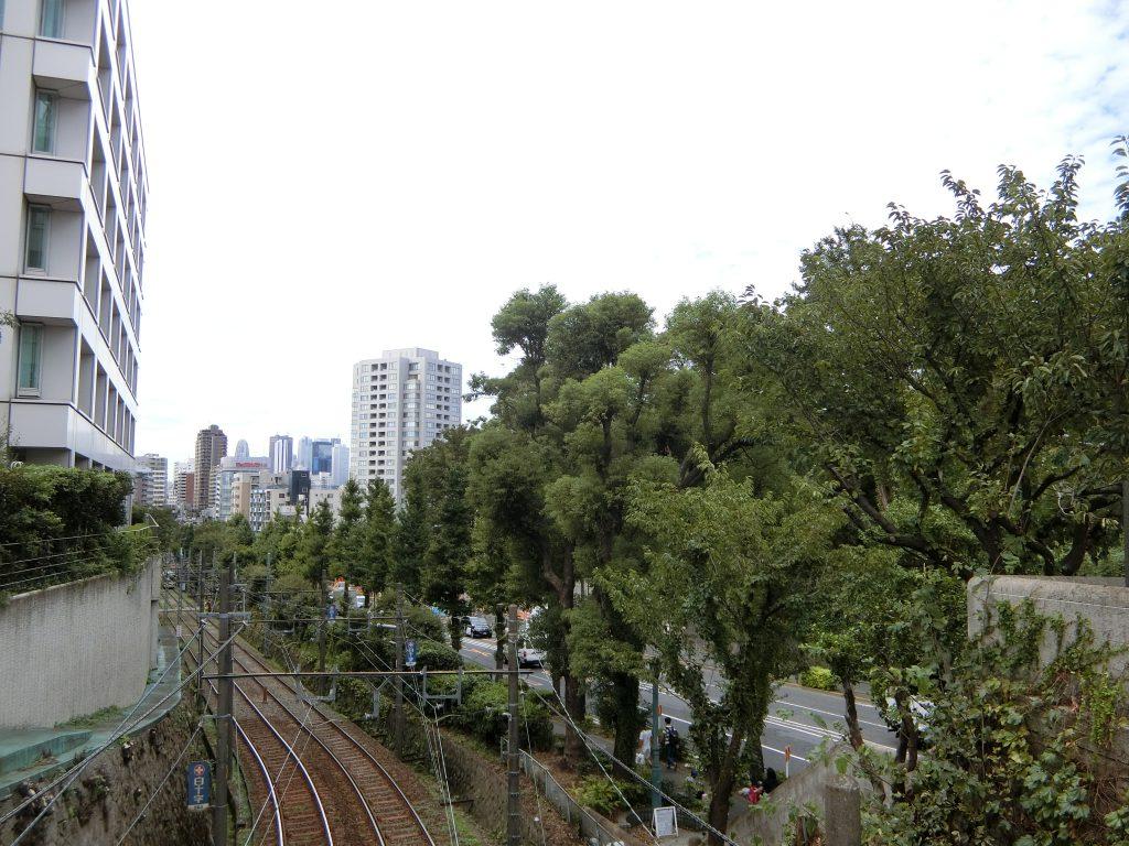 千登世橋から明治通りを望む