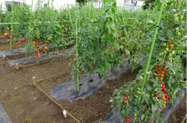 「都市型体験農園サービス」