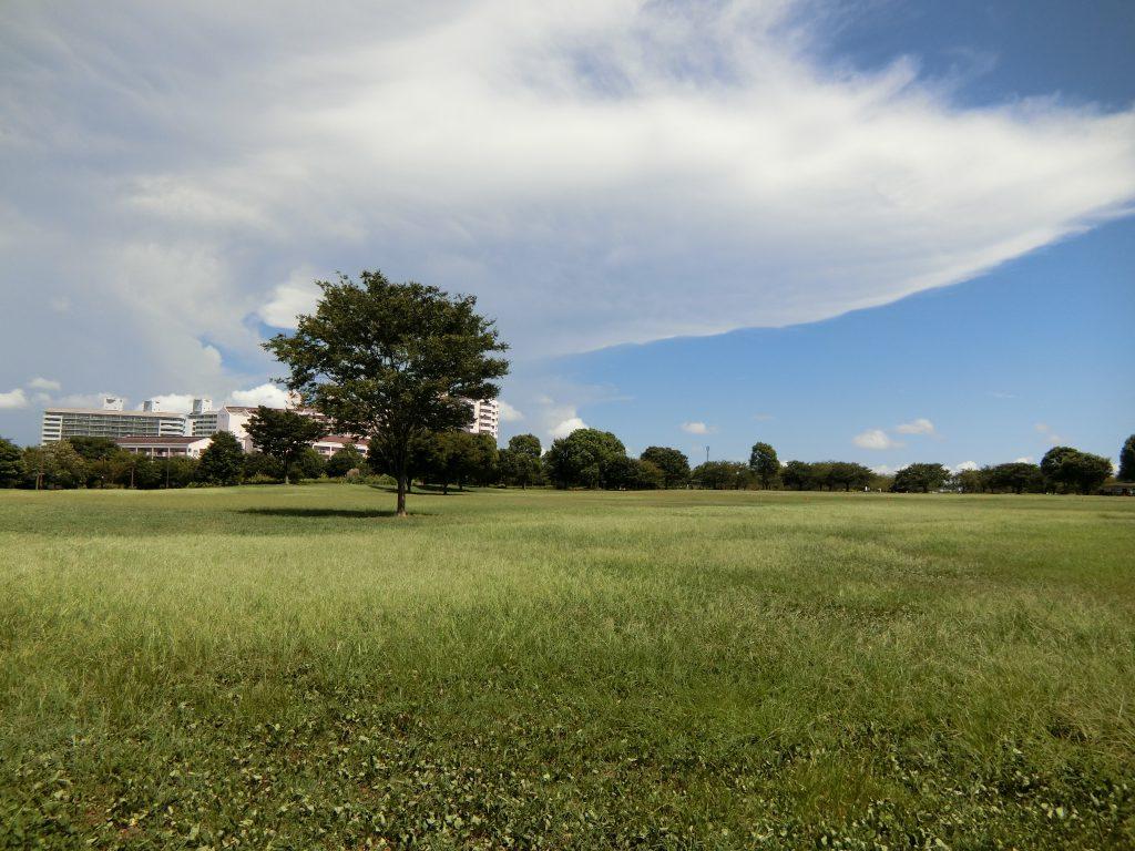 「大島小松川公園」