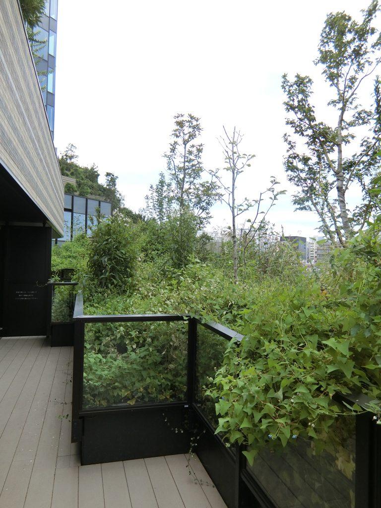 「ザ・レジデンス四谷ガーデン」の北隻向き住戸のバルコニー